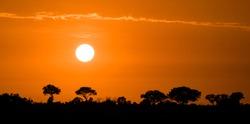 Bright orange sunrise over the bushveld of Africa