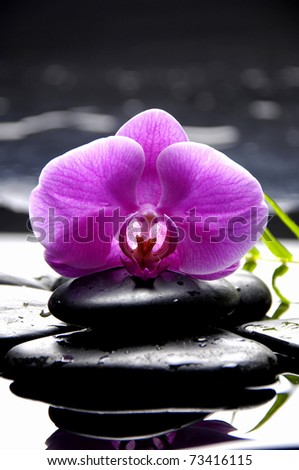 Bright orchid and green bamboo leaf with stone reflection