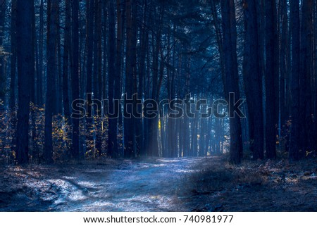 bright path along the tall pines in a dark and mysterious forest is very exciting #740981977