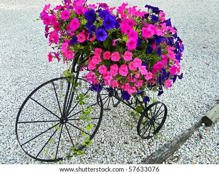 bright petunias on a vintage tricycle - stock photo