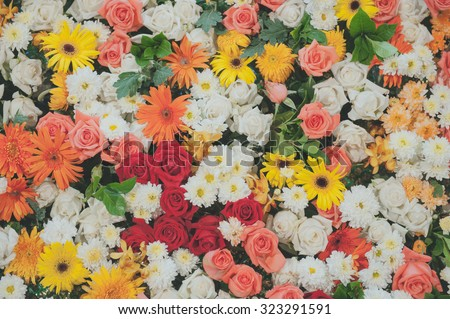 bright picture of background full of color flowers