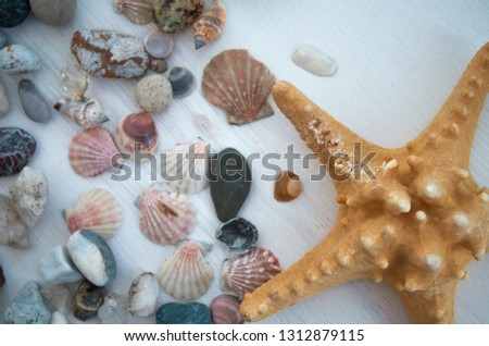 Bright picture with a lot of colorful seashells and stones close-up. Nice brown starfish nearby. The top view. Natural decorative elements. Beautiful background.