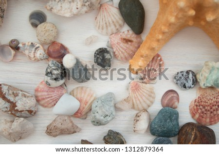 Bright picture with a lot of pink seashells and brown stones. The top view. Close-up. Natural decorative elements with a brown starfish. Beautiful background.