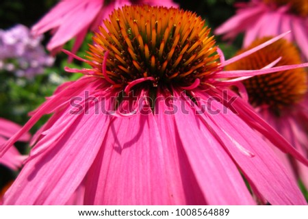 Bright Pink And Orange Spiky Flower Ez Canvas