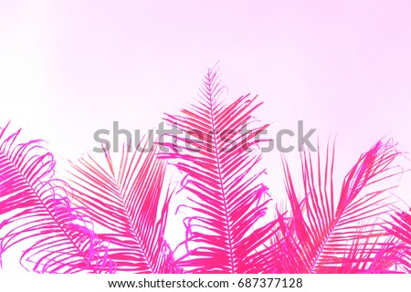 Bright pink coco palm tree leaf on sky background. Palm pink toned photo. Romantic tropical banner template with text place. Pink palm leaf ornament. Coco palm leaf backdrop. Beach wedding invitation