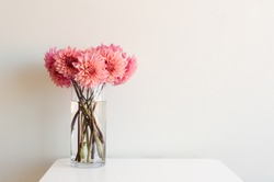Bright pink dahlias in tall glass vase on white table against neutral background with copy space to right
