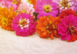 Bright pink, red, orange summer flowers on paper. Summer background with flowers. Soft focus