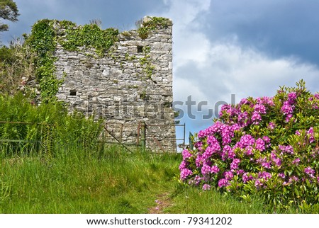 Bright pink rhododendrons add a splash of color to an old ruined castle wall overgrown with ivy, amid ferns, meadow grass and wild flowers, while a blue sky and fluffy white clouds provide copy space.