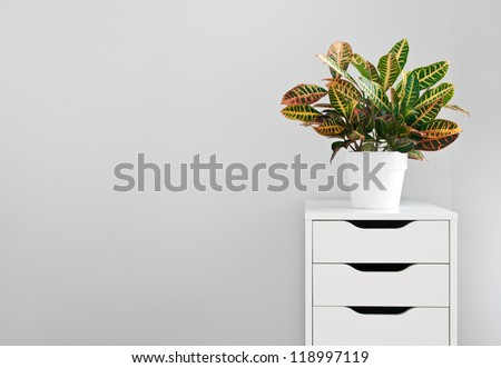 Bright plant and modern white drawer chest.
