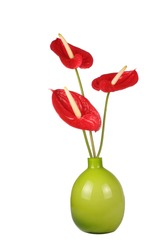 Bright red Anthurium flowers in green vase