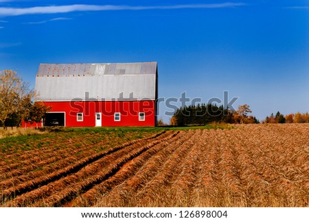 Bright red barn against a blue sky, harvested potato rows leading up to the building