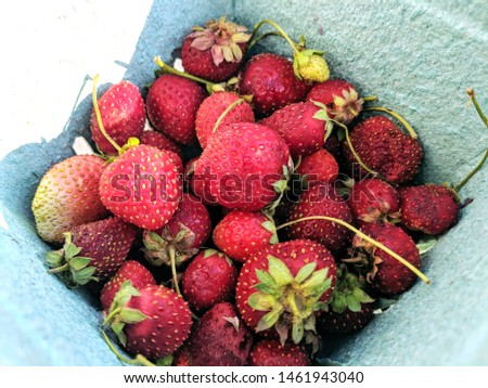 Bright Red Fresh-Picked Strawberries in Green Paper Pick Your Own Carton