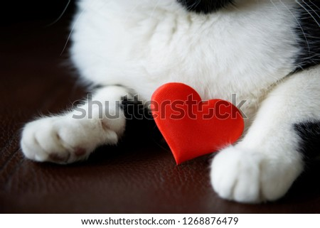 Bright red heart in the paws of a kitten. Congratulations on Valentine's Day. Cute loving kitten.                    #1268876479