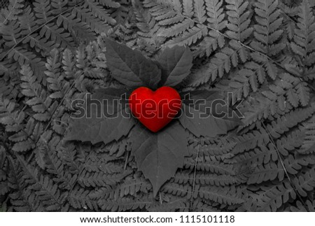 Bright red heart on black and white leafy background #1115101118