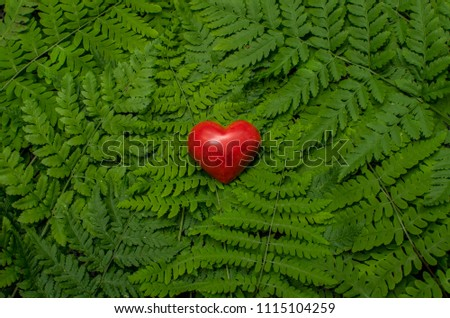 Bright red heart on green fern background #1115104259