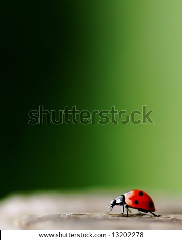 Bright red Lady Bug with green background.