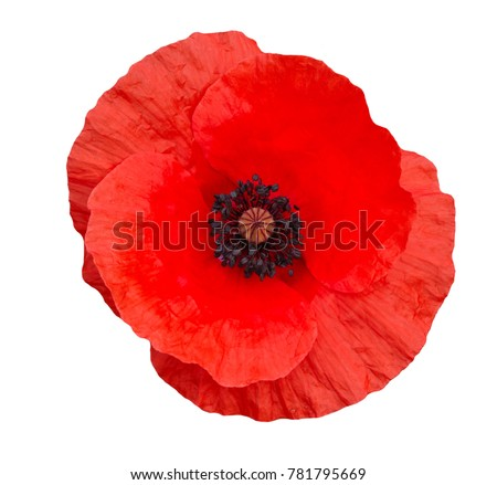 Photo of  bright red poppy flower isolated on white ,top view