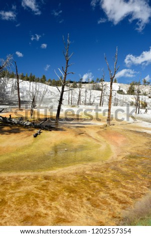 Bright saturated colors of a geyser in the upper level terrace area of Mammoth hot springs,Yellowstone NP. #1202557354