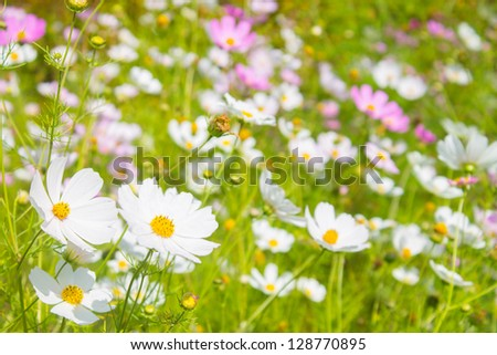 bright spring flowers background