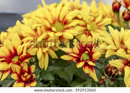 Bright spring flowersvarious fantastic flowers close up ez canvas bright spring flowersvarious fantastic flowers close up mightylinksfo