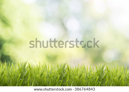 Bright spring grass field with sunlight bokeh background #386764843