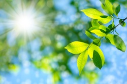 Bright spring natural background