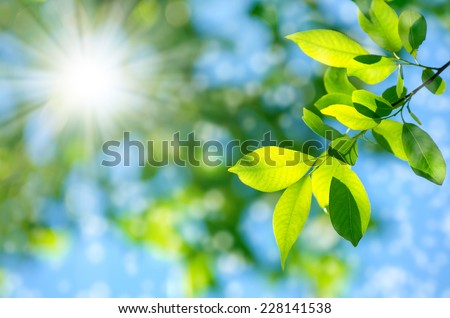 Bright spring natural background #228141538