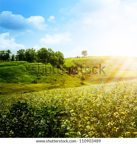 Bright Summer Afternoon. Natural Backgrounds