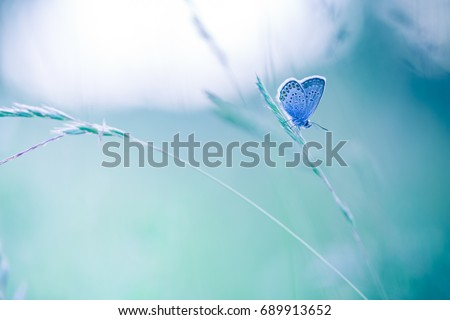 Bright summer meadow flowers with beautiful butterfly. Blurred nature background copy space.