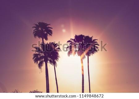 bright summer palms in phoenix Arizona