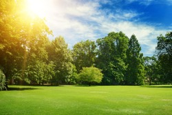 Bright summer sun illuminates park covered trees and green grass