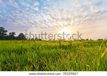 Bright sun and green grass field.