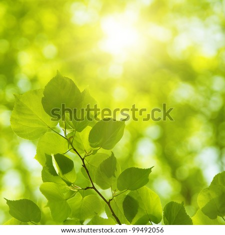 Bright sun in spring forest.