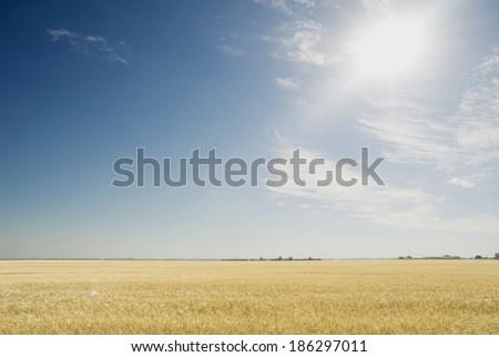 bright sun on a blue sky #186297011