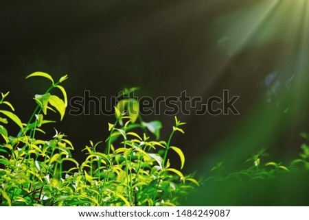 Bright sun shining from top right of the frame to bright green leaves.
