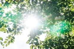 Bright sun shining through the green leaves in a forest and beautiful green lens flares
