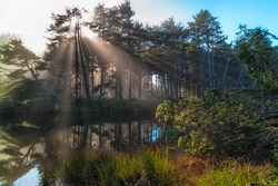 Bright sun shoots rays of light through filted trees that line the bank of Beaver Creek on the Oregon Coast