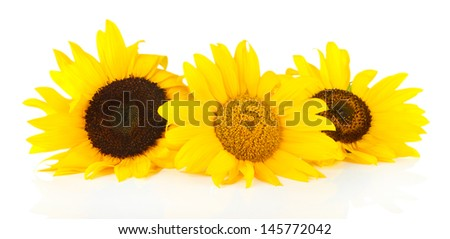 Bright sunflowers isolated on white