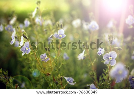 Bright sunlight in a summer meadow. - stock photo