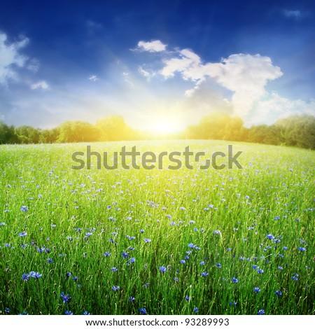 Bright sunlight over cornflower field. #93289993