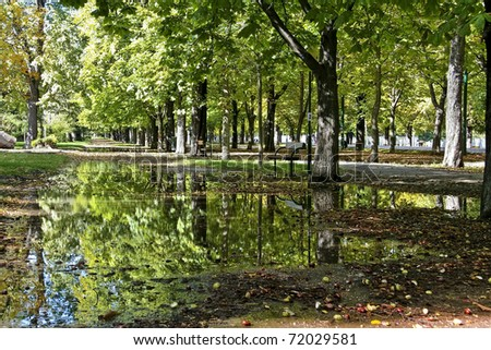 Bright sunlit and vibrant alley of trees with reflecting puddle in autumn/summer