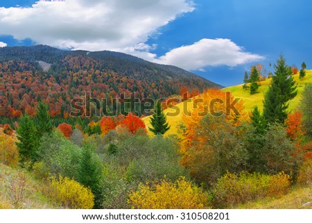bright sunny autumn in the mountains. Colourfull wood