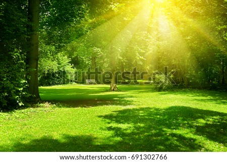 Bright sunny day in park. The sun rays illuminate green grass and trees. #691302766