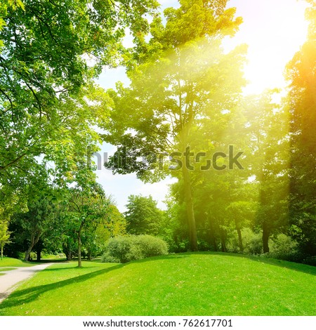 Bright sunny day in park. The sun rays illuminate green grass and trees. - Shutterstock ID 762617701