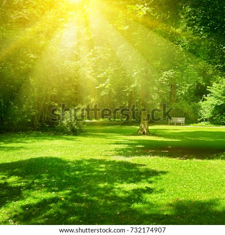 Bright sunny day in park. The sun rays illuminate green grass and trees. Summer landscape. #732174907