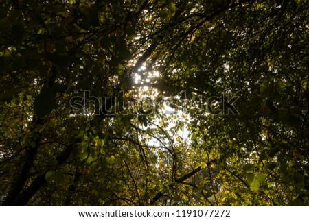 Bright sunny through the foliage. Autumn foliage. #1191077272