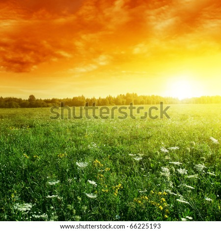 Bright sunset and summer meadow. - stock photo