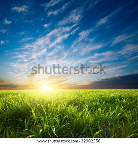 Bright sunset over growing green crops in the field