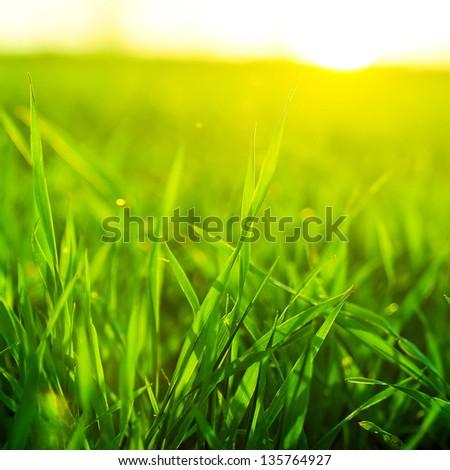 Bright vibrant green grass close-up