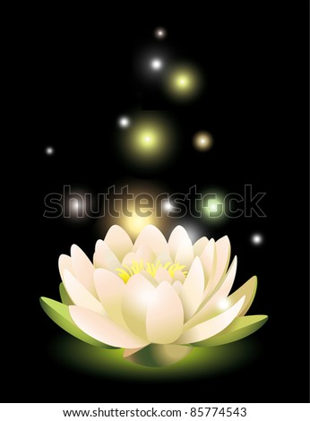 Bright Water lily on a black background